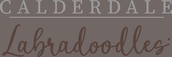 Calderdale Labradoodles